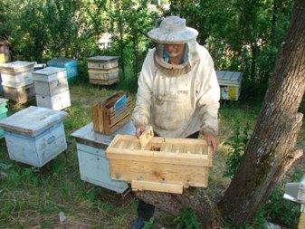 Как сделать нуклеус пчел 243